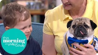 Meet Alfie the Therapy Pug Helping Change Lives | This Morning