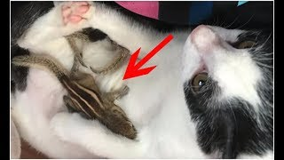 After This Man Rescued Four Baby Squirrels, His Cat's Reaction Was Startling… .