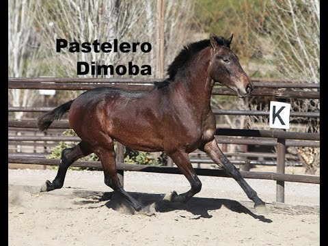 Pastelero Dimoba (Publicado 28-1-2018)