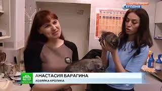 Приём экзотических животных в СПб.