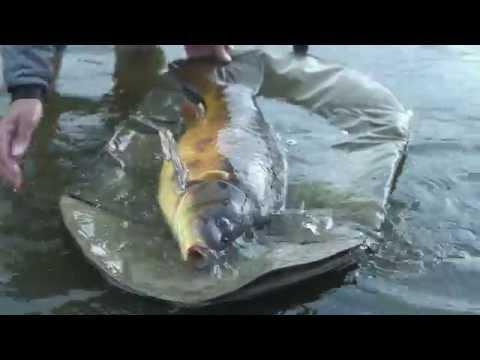Matt Hayes - om hans syn på karpefiskeri