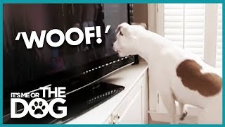 How to Make Your Dog Stop Barking   It's Me or the Dog
