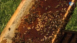 Об искусстве разведения пчел рассказал пасечник со стажем Александр Жеребцов