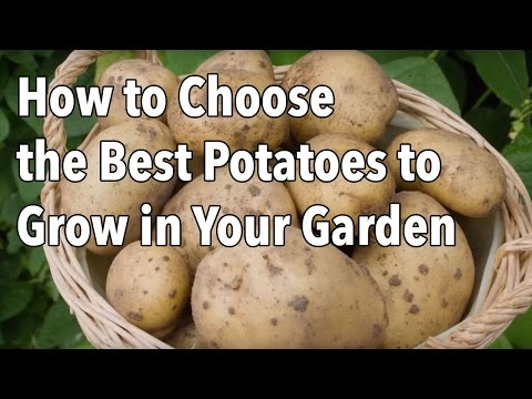 , title : 'How to Choose the Best Potatoes to Grow in Your Garden