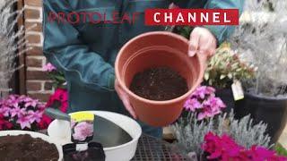 シャクヤク芍薬の育て方・日常管理「苗の植え付け方法」