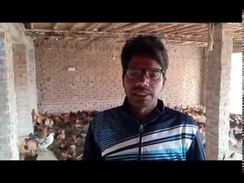 how to start Desi hen farming in Pakistan/Golden misri hen