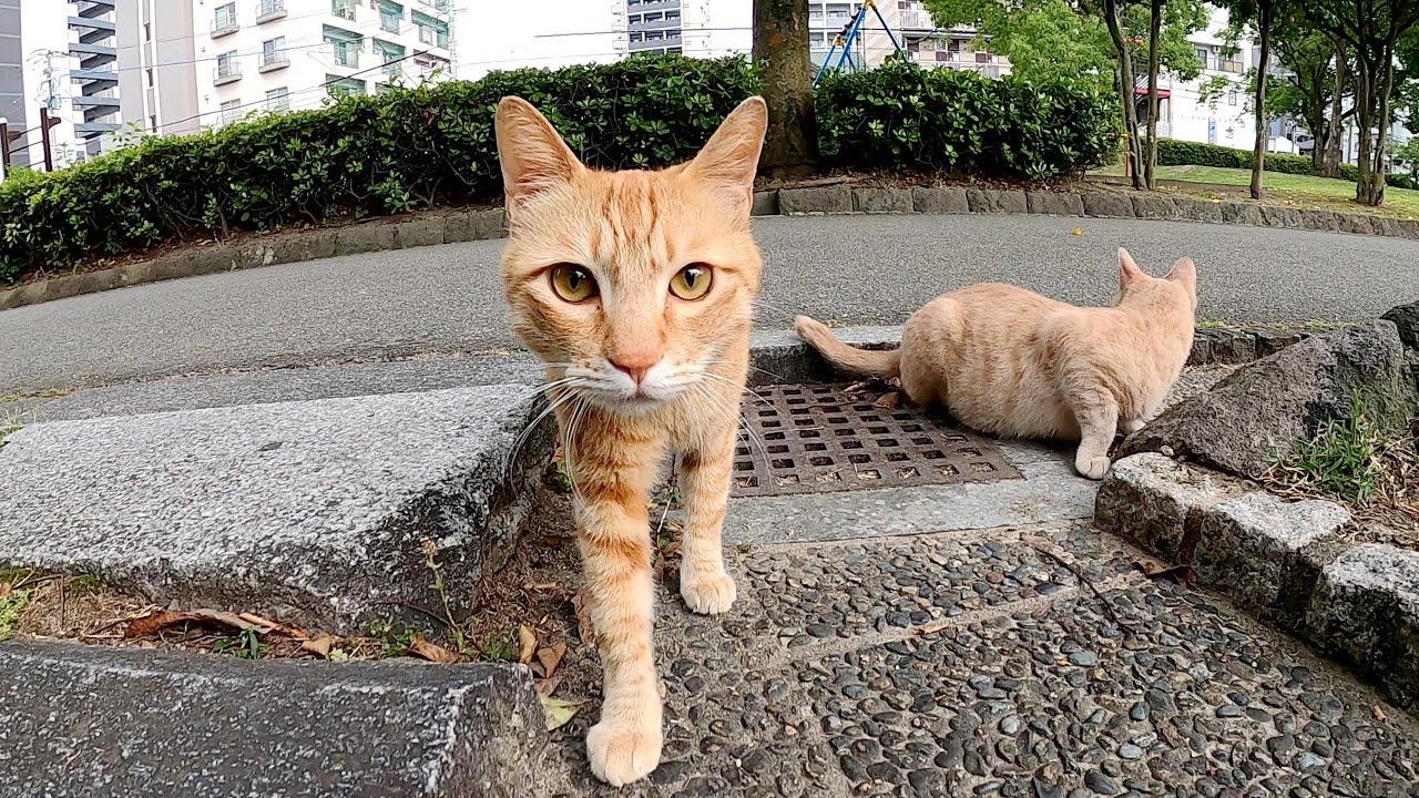 新しい場所にお出掛けしたいクリーム猫、怖がりな茶トラ猫を待ってあげる