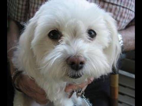 Dog Eats Paralyzed Man's Testicles As He Slept @hodgetwins