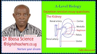 Excretion structured questions