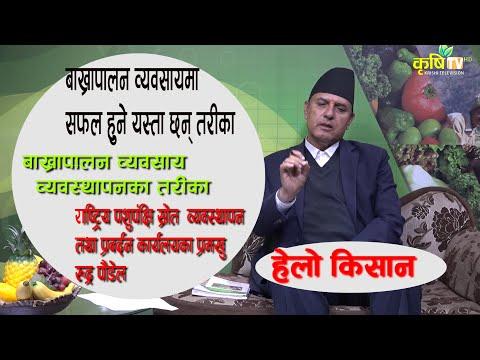 नेपालमा बाख्रा पालन कसरी गर्ने ।। how to start goat farming in nepal   Krishi TV HD