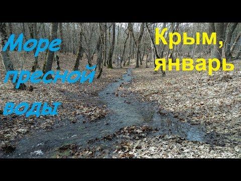 Крым, Судак, ручьи бегут. Весна 30.01.19 в лесу: грибы, сойка, полноводье