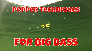 FLY FISHING TECHNIQUES FOR BIG BASS