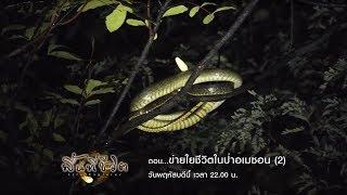 พื้นที่ชีวิต : ข่ายใยชีวิตในป่าอเมซอน (2) (6 ก.ย. 61)