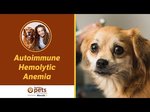 Video Autoimmune Hemolytic Anemia
