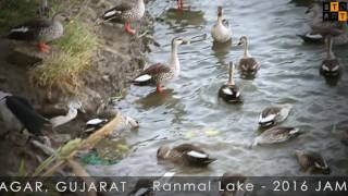 Ranmal lake(Lakhota lake) winter 2016- Jamnagar