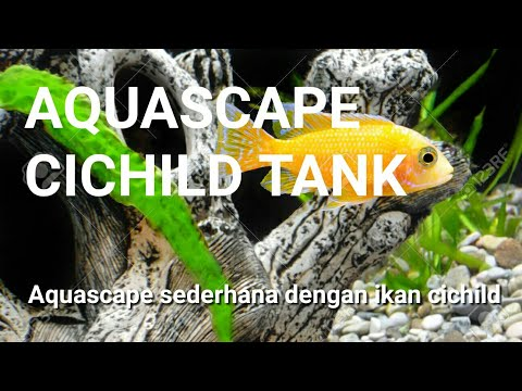 AMAZING! Aquascape seherhana dengan ikan cichild | Simple Aquascape with Lemon Cichlid tank