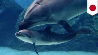 不願寶貝受苦 海豚媽媽含淚弒子