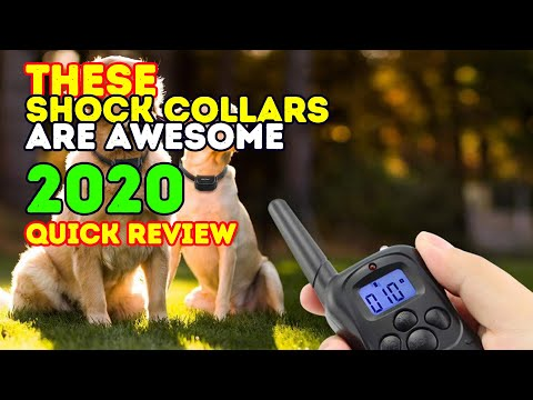 Best Shock Collars For Dog 2018
