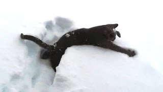 Kittens Discovering Snow For The First Time Compilation