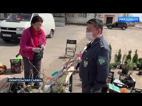 Специалисты Управления Россельхознадзора контролирует качество посадочного материала, реализуемого в Республике Калмыкия