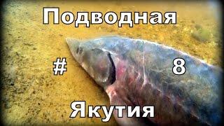 Рыбалка на осетров в якутии