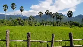 preview picture of video 'ផ្លូវចូលទៅទឹកជ្រោះជ្រៀវ #កំពងស្ពឺ #Cambodia #Travel  #OneDay #Hyperlap'