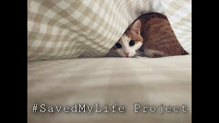 Sia - Saved My Life (Lyrics Video)