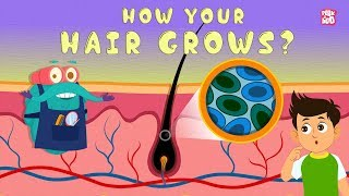 How Your Hair Grows? - The Dr. Binocs Show | Best Learning Videos For Kids | Peekaboo Kidz