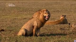 #110 Подборка видео с животными / #110 Best animals video compilation