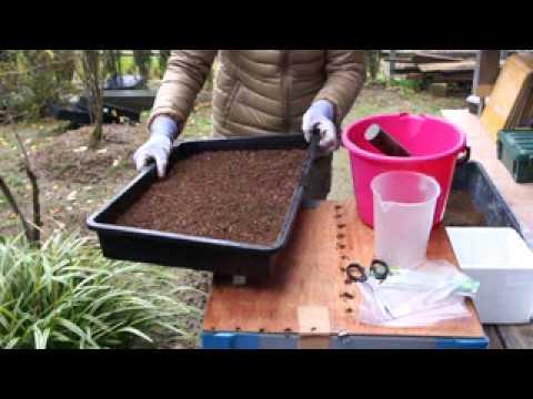 新潟産苔の作り方 苔のたねを使って
