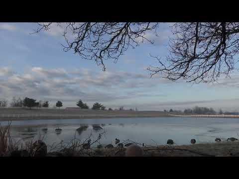 goose-hunting-2019