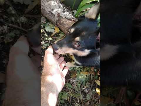 Bandit meets wild kitty