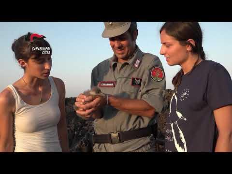 Preview video IL CALENDARIO CITES 2021 DELL'ARMA DEI CARABINIERI