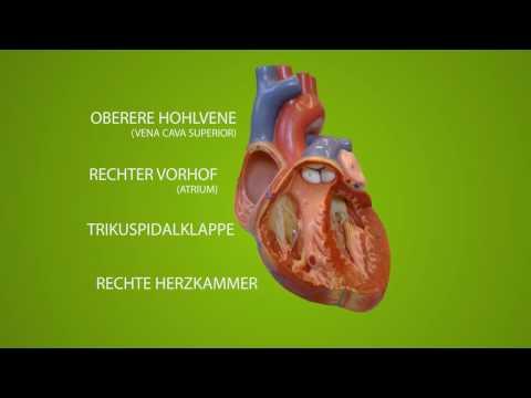 Der Schmerz der Muskeln der Brustwirbelsäule