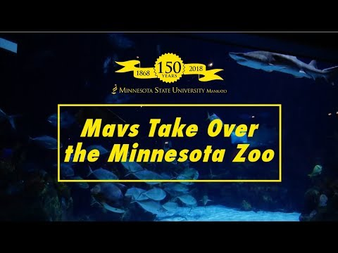 Mavs Take Over the MN Zoo Final
