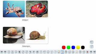 Eğitim Vadisi 9.Sınıf Biyoloji 16.Föy Hayvanlar(Omurgasız Hayvanlar) Konu Anlatım Videoları