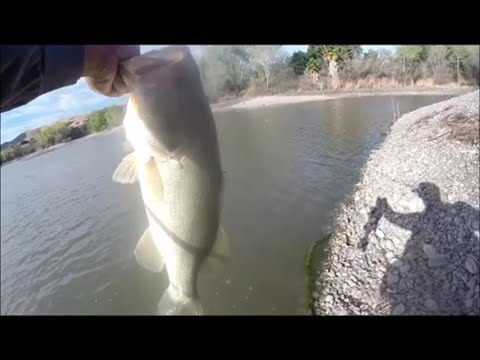 huge local pond largemouth bass