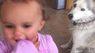 Ну очень Смешные Собаки  Приколы с Собаками 2018 #2