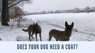 Does Your Dog Need A Jacket Or A Dog Coat?