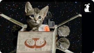 Star Wars Parody - Paw Warz - Trench Run Scene - Petody ®