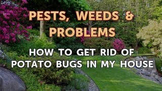 How to Get Rid of Potato Bugs in My House