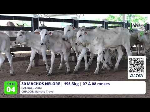 30 MACHOS NELORE - CACHOEIRA-BA