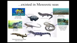Global Distribution Achieved by Halisaurine Mosasaurs Explained by a New Discovery from Japan