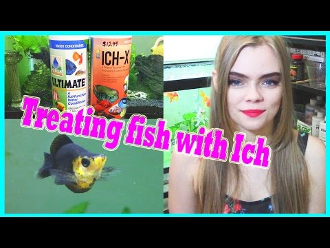 Video HOW TO TREAT FISH WITH ICH / ICK ( WHITE SPOT DISEASE )