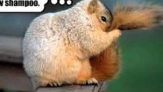 Story Of A Squirrel