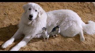 一只调皮的狗狗,却喜欢可爱的小企鹅,还成了它们的守护之神