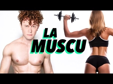 La fixation du grand muscle rond