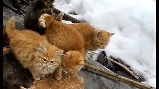 Куда девать котят на моем участке