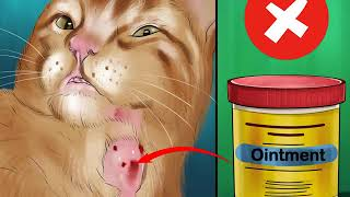 How To Treat Burns On A Cat