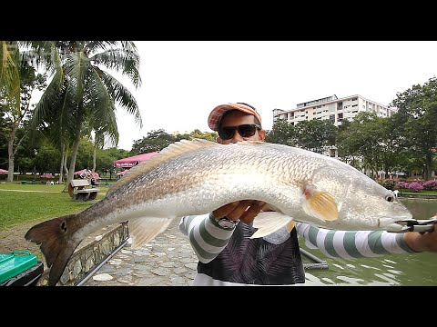 FishingKaki.com – Lunkerhunt Soft Plastic Lures